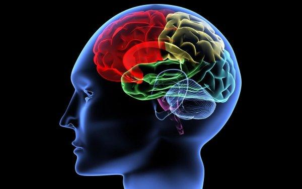 Ученые рассказали, что вызывает преждевременное старение мозга