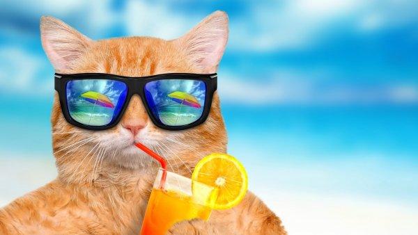 Наверно подобранные солнцезащитные очки проводят к потере зрения – Ученые