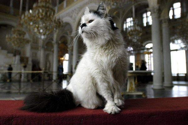 Эрмитаж попал в мировой список лучших мест для любителей кошек