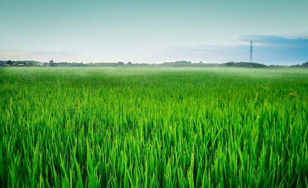 Ученые: На Земле наступит голод из-за нашествия насекомых