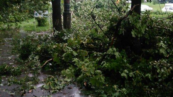 В Новочеркасске три недели не могут убрать упавшее во время стихии дерево