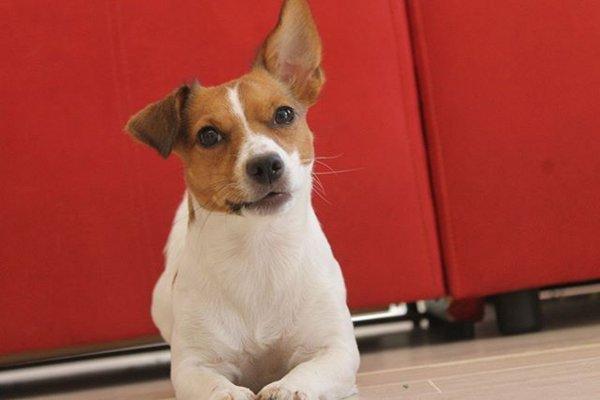 Ученые развеяли миф, что собаки умнее других животных