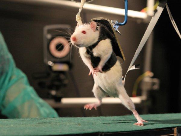 Ученые: Космическое радиоактивное излучение вызывает поражение слизистой кишечника