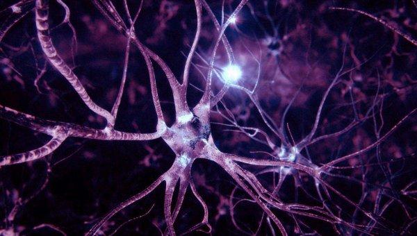 Миф разрушен: Ученые доказали возможность восстановления нервных клеток