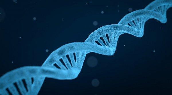 Ученые: Геи получают больше секса из-за генов