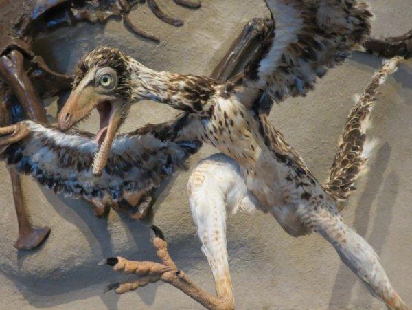 Грандиозная находка останков древней птицы потрясла ученых