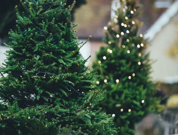В Роскачестве рассказали, как выбрать новогоднюю елку