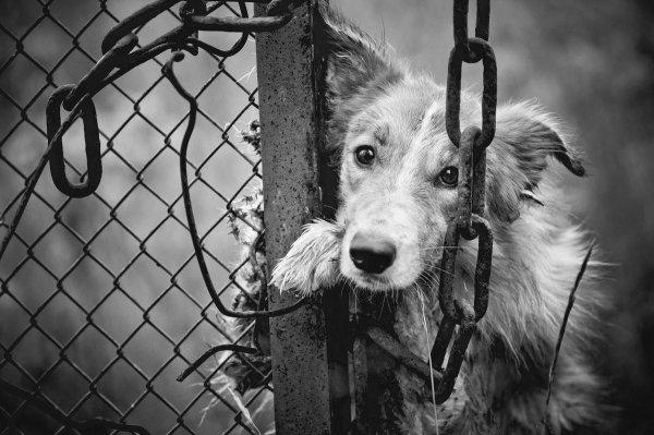 Собаки в семьях курильщиков умирают от преждевременного старения